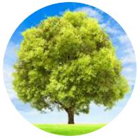 Conceito para criação de identidade visual - árvore