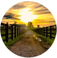 Conceito para criação de identidade visual - rural
